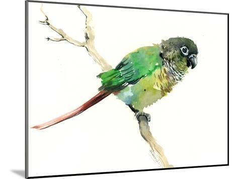 Conure Parakeet Parrot-Suren Nersisyan-Mounted Art Print