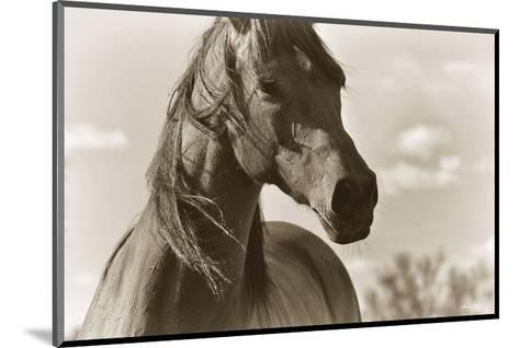 Lonesome Dove-Barry Hart-Mounted Art Print