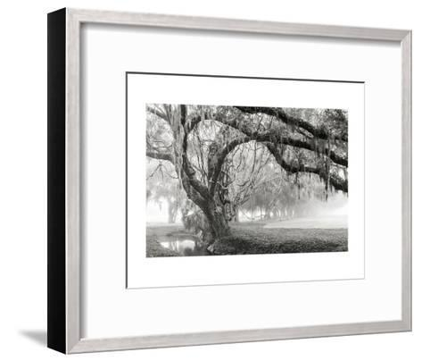 Tangled Vines-Barbara Northrup-Framed Art Print