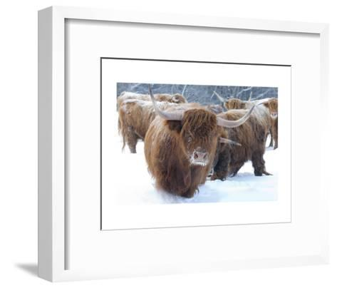 Scottish Highlanders-Orah Moore-Framed Art Print