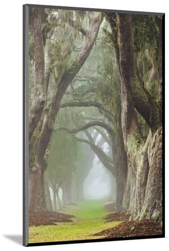 Avenue of Oaks-Barbara Northrup-Mounted Art Print