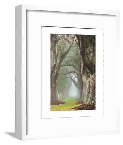 Avenue of Oaks-Barbara Northrup-Framed Art Print
