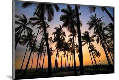 Palm Forest-Dennis Frates-Mounted Art Print