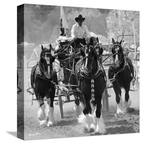 Shire Horses-Barry Hart-Stretched Canvas Print