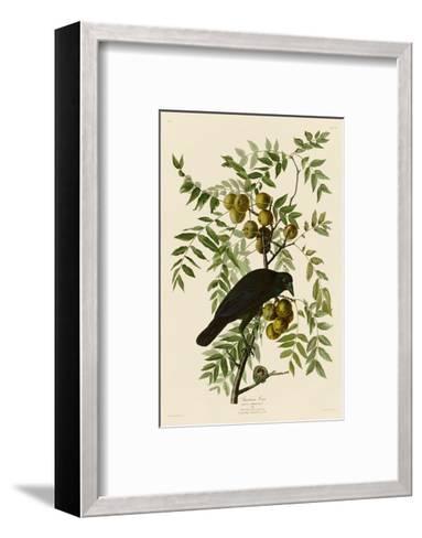 American Crow-John James Audubon-Framed Art Print