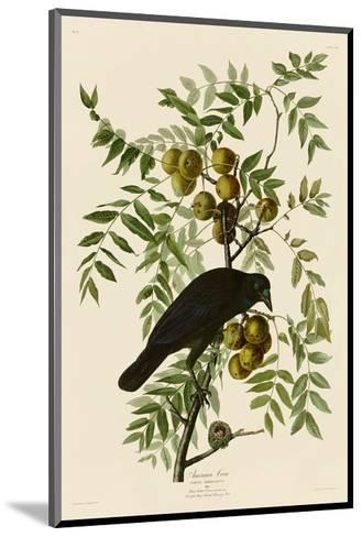 American Crow-John James Audubon-Mounted Art Print