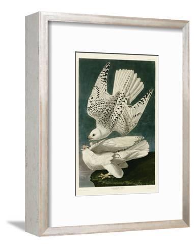 Iceland or Jer Falcon-John James Audubon-Framed Art Print