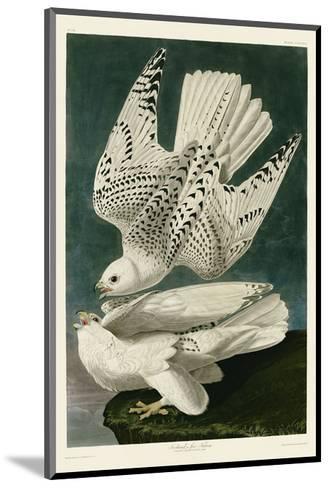 Iceland or Jer Falcon-John James Audubon-Mounted Art Print