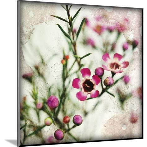 Wax Flower I-James Guilliam-Mounted Giclee Print