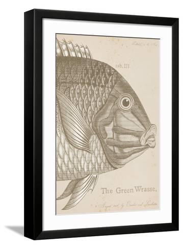 Marine Studies I-Maria Mendez-Framed Art Print
