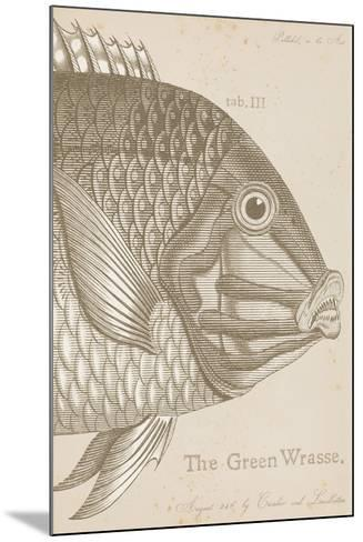 Marine Studies I-Maria Mendez-Mounted Giclee Print