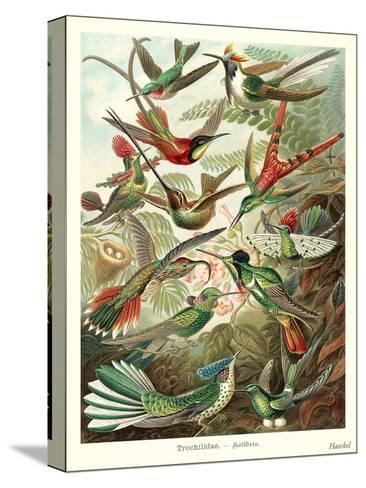 Hummingbirds-Found Image Press-Stretched Canvas Print