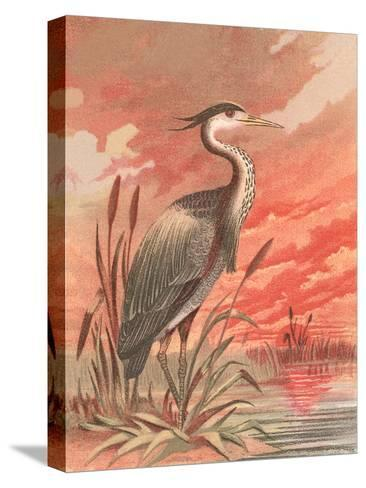 Crane In Marsh At Sunset-Found Image Press-Stretched Canvas Print