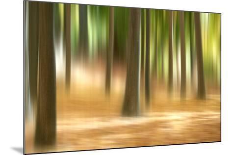 Forest Run III-James McLoughlin-Mounted Art Print