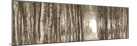 Fairytale Forest-Bill Philip-Mounted Art Print