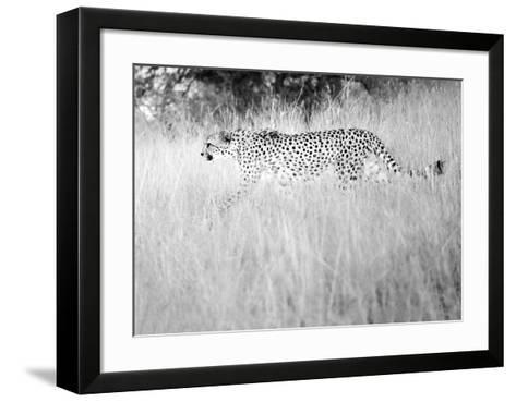 In The Wild-Lee Frost-Framed Art Print