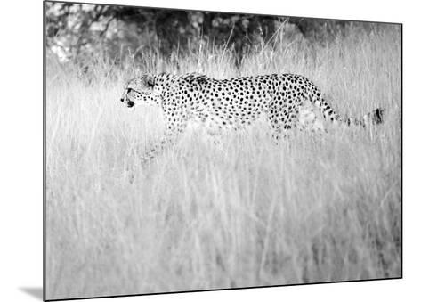 In The Wild-Lee Frost-Mounted Art Print