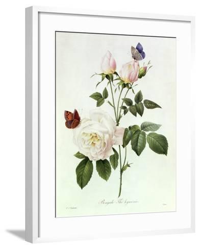 Rosa Bengale the Hymenes-Pierre-Joseph Redout?-Framed Art Print