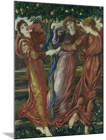 Garden of the Hesperides, 1869-73-Edward Burne-Jones-Mounted Giclee Print