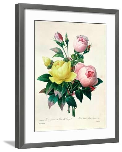 """Rosa Lutea and Rosa Indica, from """"Les Choix Des Plus Belles Fleurs,"""" 1827-Pierre-Joseph Redout?-Framed Art Print"""