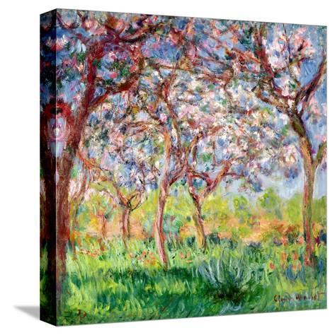 Printemps a Giverny, 1903-Claude Monet-Stretched Canvas Print