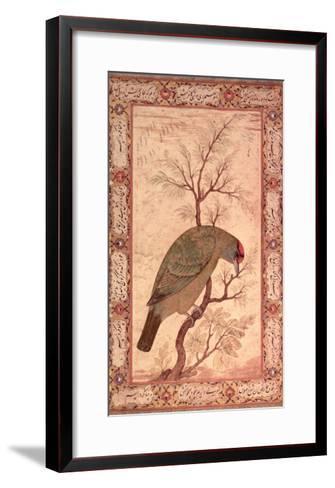 A Barbet (Himalayan Blue-Throated Bird) Jahangir Period, Mughal, 1615-Ustad Mansur-Framed Art Print