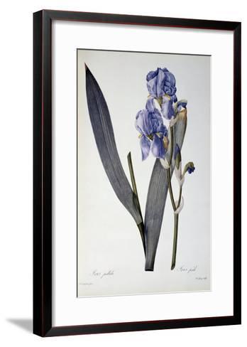 Iris Pallida, from Les Liliacees, 1812-Pierre-Joseph Redout?-Framed Art Print