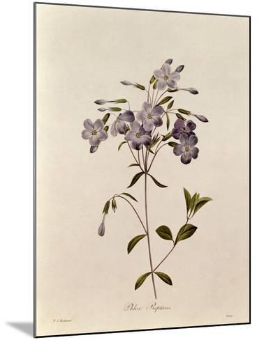 Phlox Reptans-Pierre-Joseph Redout?-Mounted Giclee Print