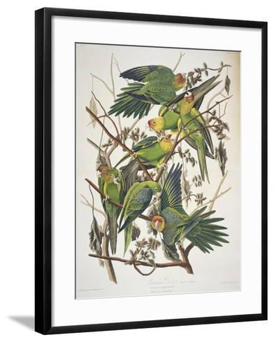 "Carolina Parakeet, from ""Birds of America,"" 1829-John James Audubon-Framed Art Print"
