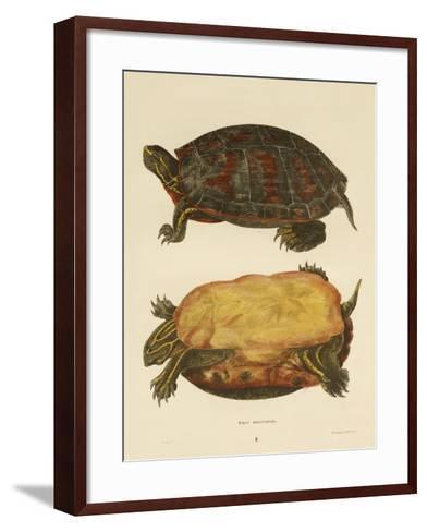 Hand Colored Lithograph of Emrys Rubriventris-John Edwards Holbrook-Framed Art Print