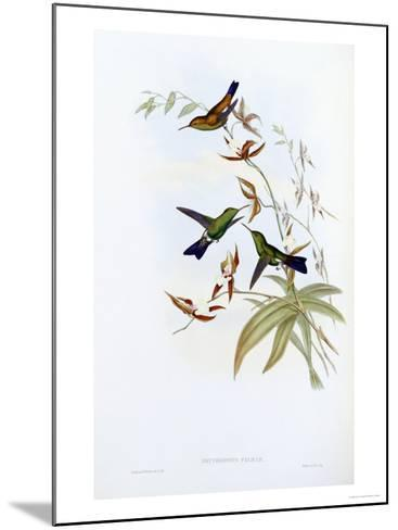 A Monograph of the Trochilidae or Family of Hummingbirds, Published 1849-1861-John Gould-Mounted Giclee Print
