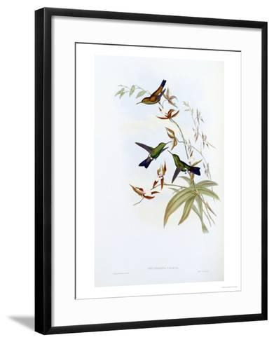 A Monograph of the Trochilidae or Family of Hummingbirds, Published 1849-1861-John Gould-Framed Art Print