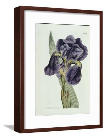 Iris-William Curtis-Framed Art Print