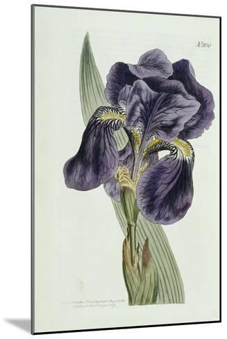 Iris-William Curtis-Mounted Giclee Print