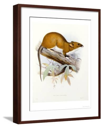 """Hand-Coloured Lithograph from """"Fauna, Flora and Archaeology of Central America""""-J. G. Keulemans-Framed Art Print"""