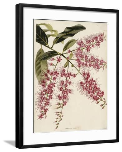 The Botanical Cabinet, Consisting of Coloured Delineations of Plants from All Countries-Conrad Loddiges-Framed Art Print