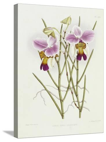 The Orchid Album Plate 475--Stretched Canvas Print