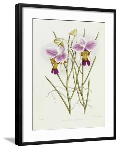 The Orchid Album Plate 475--Framed Art Print