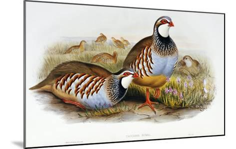 Red Legged Partridges (Caccabis Rubra)-John Gould-Mounted Giclee Print