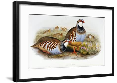 Red Legged Partridges (Caccabis Rubra)-John Gould-Framed Art Print
