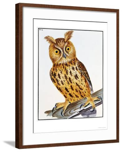 The Birds of Great Britain, First Edition, 1789-1794-William Lewin-Framed Art Print