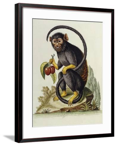 A Little Black Monkey Brought from the West Indies by Commodore Fitzroy Lee-George Edwards-Framed Art Print