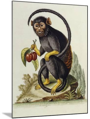 A Little Black Monkey Brought from the West Indies by Commodore Fitzroy Lee-George Edwards-Mounted Giclee Print