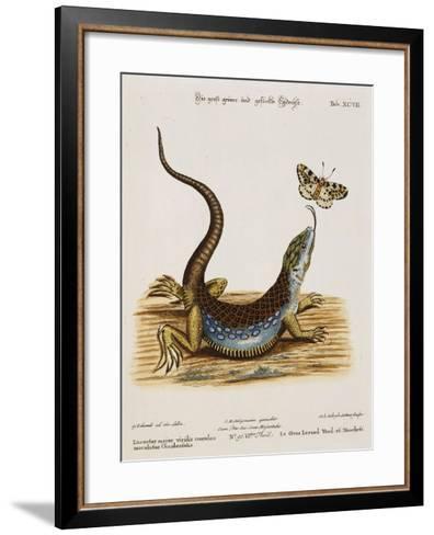 Lizard Chasing a Butterfly-Johann Michael Seligman-Framed Art Print