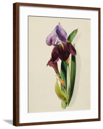 A Flag Iris-Thomas Holland-Framed Art Print