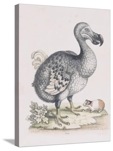 The Dodo-Frederick P^ Nodder-Stretched Canvas Print