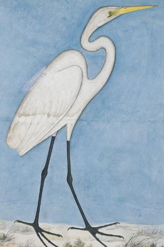 A Great Egret, Lucknow School, circa 1790--Stretched Canvas Print