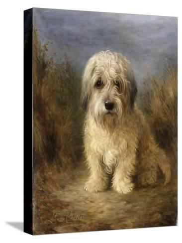 A Dandie Dinmont-Lilian Cheviot-Stretched Canvas Print