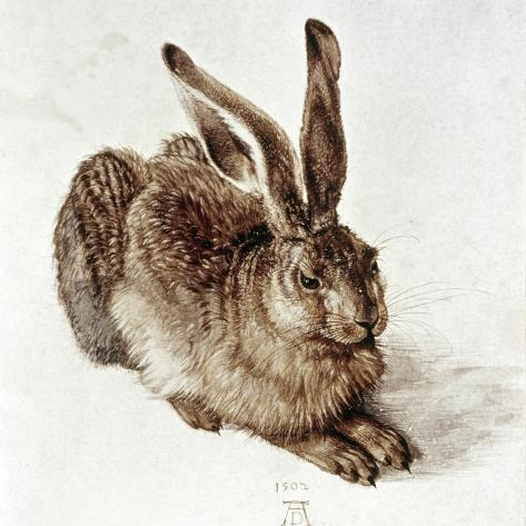 The Young Hare-Albrecht D?rer-Stretched Canvas Print