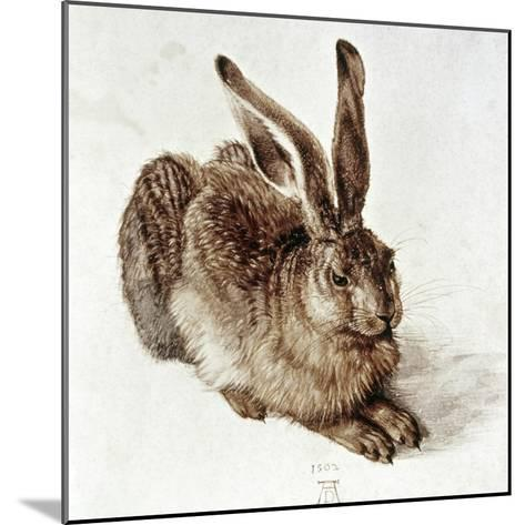 The Young Hare-Albrecht D?rer-Mounted Giclee Print